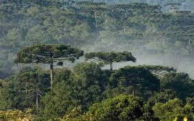 De 2000 a 2018, o Brasil perdeu 7,6% de suas florestas diz IBGE
